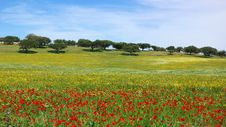 Free Poppies  In Colored Field. Royalty Free Stock Photography - 5096087
