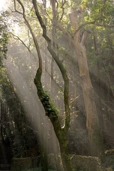 Sunlight Entering The Forest With Green Toning Stock Photos