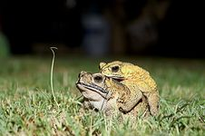 Frog Lover Stock Photo