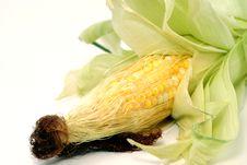 Free Raw Corn Stock Image - 5097181