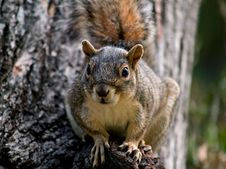 Free Squirrel Stock Images - 5097214