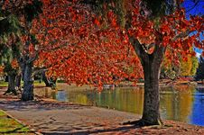 Free Red Foliage Stock Photo - 5097270