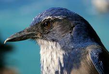 Free Bird Close-up Stock Photos - 5097403
