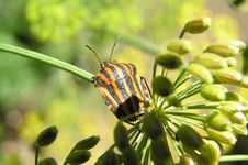 Free The Bug On Green Stock Photography - 5098312