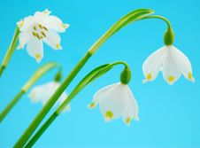 Free Spring Flowers Stock Photo - 5098350