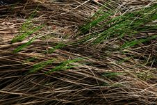 Grey Grass And Green Grass Royalty Free Stock Photos