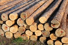 Stacked Timber Logs Royalty Free Stock Photo