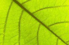Free Leaf : Macro Stock Photography - 5098882