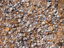 Free Cockleshells In Sand Stock Images - 5099494