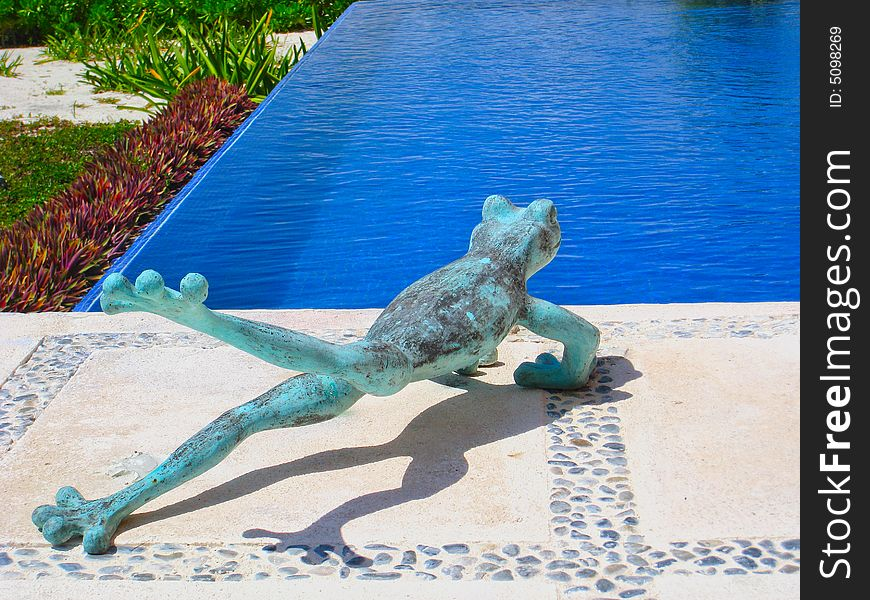 Frog Taking the Plunge