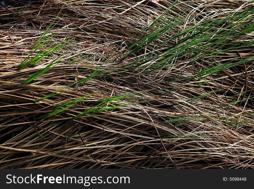 Grey grass and green grass