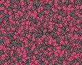 Free Mixed Raspberries Stock Photos - 518143