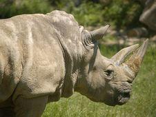 Free Rhino Stock Image - 511861