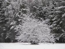 Free Winter 08 Stock Photo - 513400