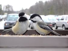 Free Birds In The Parking Stock Photography - 513772
