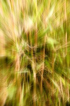 Free Background - Bamboo Stock Image - 517221