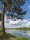 Free Tree On A Coast Of River In Country Royalty Free Stock Photography - 5100387