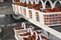 Free Fresh Strawberries Royalty Free Stock Photo - 5107345