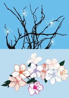 Free Vector Cherry Flowers Royalty Free Stock Photography - 5100857