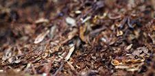 Free Tobacco Stock Photo - 5101300