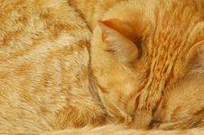 Free Background Cat Royalty Free Stock Image - 5101696