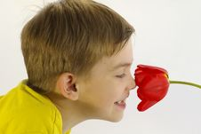 Free Boy And The Tulip Stock Photo - 5101930