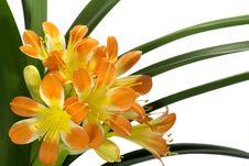 Free Orange Bouquet Royalty Free Stock Photo - 5101985