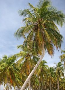 Free Palms Against Sky Stock Image - 5101991