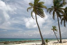 Tropic Palms In Wind Stock Images