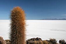 Cactus Against Isla De Pescado Royalty Free Stock Images