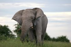 Free Male Elephant Stock Images - 5102274