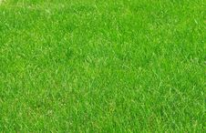 Free Grass Texture Stock Photography - 5102312