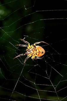 Free Spider On The Net Royalty Free Stock Images - 5102419