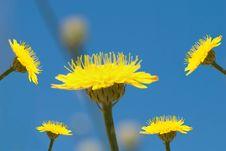 Free Yellow Flowers Stock Photo - 5103440