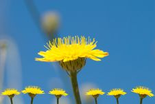 Free Yellow Flowers Royalty Free Stock Image - 5103506