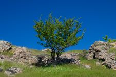 Free The Green Grass And Tree Stock Image - 5104011