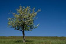 Free The Green Grass And Tree Royalty Free Stock Photos - 5104078