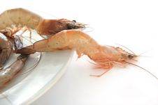 Free Raw Prawn Stock Image - 5106511