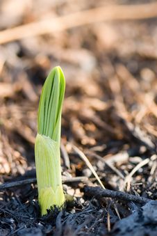 Free Small Sprout Macro Stock Image - 5106551