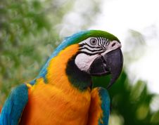 Free Blue And Gold Macaw Royalty Free Stock Images - 5106729