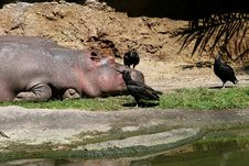 Free Hippo Stock Images - 5106934