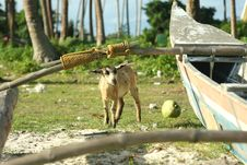 Free Billy Goat Beside Fishing Boat Stock Image - 5107011