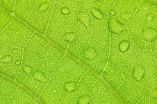 Free Green Vein II Royalty Free Stock Photography - 5107377