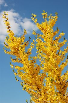 Free Yellow Flowers On Background  Blue Sky Stock Images - 5107524