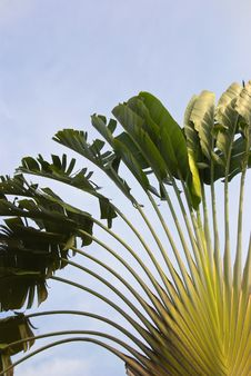 Free Palm Tree Leaves Royalty Free Stock Photo - 5108385