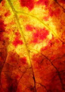 Free Autumn Leaves Stock Image - 5108911