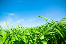 Free Cloudy Sky And Grass Stock Photos - 5109163