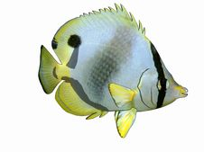Free Cartoon Butterflyfish Royalty Free Stock Images - 5109559