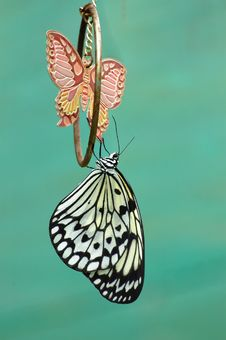 Hanging Butterfly Stock Images
