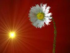 Free Flower Disintegration Stock Images - 5109794